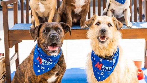Bank 140 Breed.Metro Bank Profit Soars But Growth Guidance Cut Sharecast Com