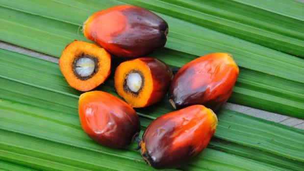 palm oil dekel palm nut
