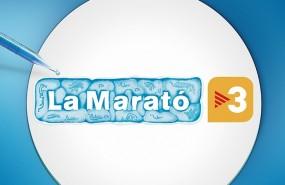 marato ok