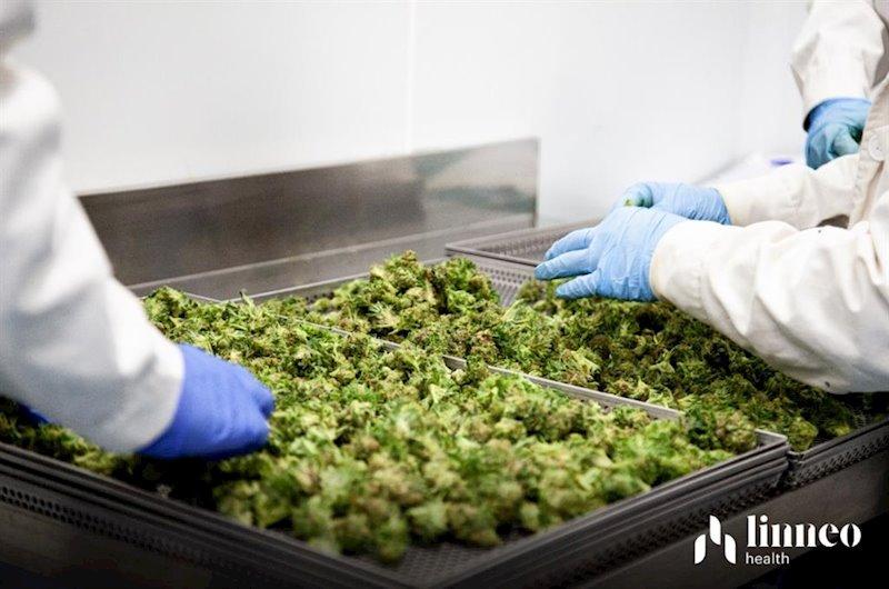 ep fabricacion de cannabis medicinal