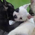 ep animal animales perro perros cachorro cachorros perra perras 20170706182801
