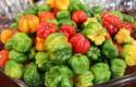 ep pimientos verdura agroalimentacion