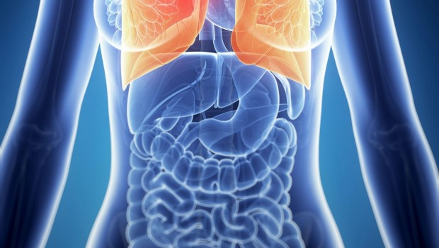 ep 19040628 - 3d rendered illustration of the female anatomy - lung cancer